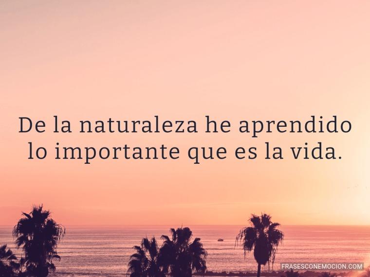 De la naturaleza he aprendido...