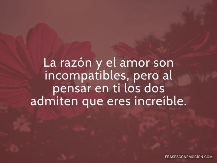 La razón y el amor...